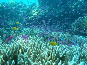 体験スミロンサンゴと魚たち600.jpg